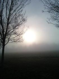 mystery morning
